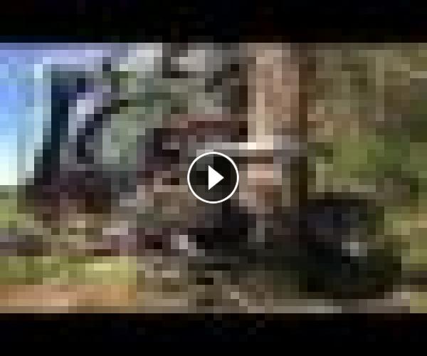 World's Modern Long Reach Excavator Machine Working – Heavy Equipment Cutting Big Tree Machine